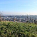 Die Stadt Neustadt an der Weinstraße in der ich Weinbau studiert habe